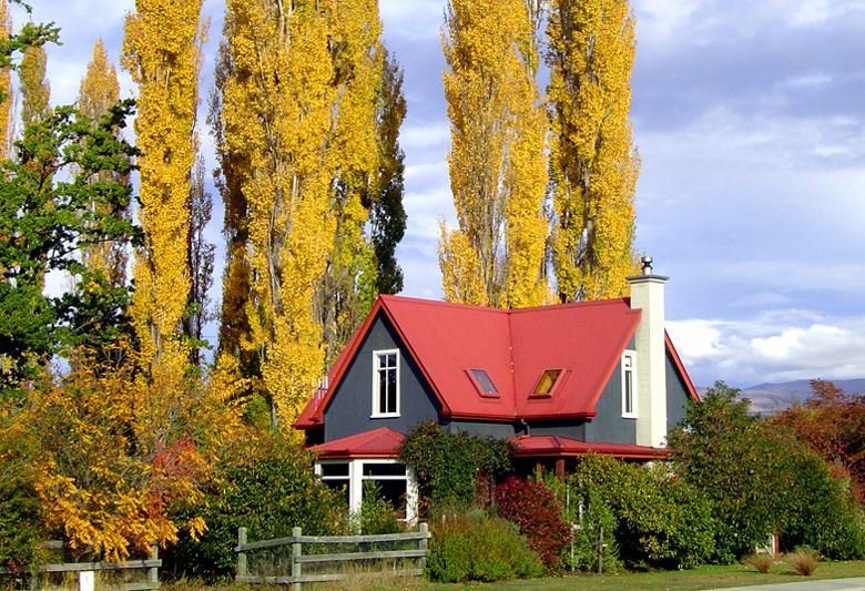 Client's home in front of poplar trees